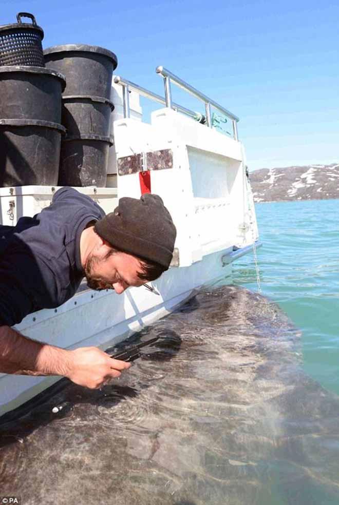 """Cá mập 400 tuổi có thể giúp con người sống """"bất tử""""? - 2"""