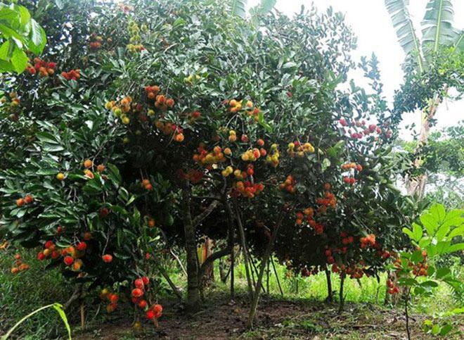 Hè rồi, làm ngay một chuyến về miền Tây thăm vườn cây trái trĩu quả thôi! - 3