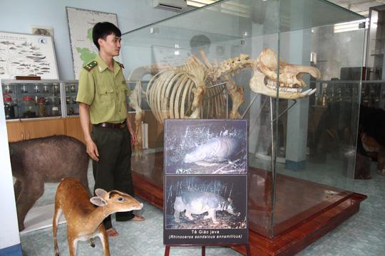 Chiêm ngưỡng bộ xương tê giác Java cuối cùng của Việt Nam - 1