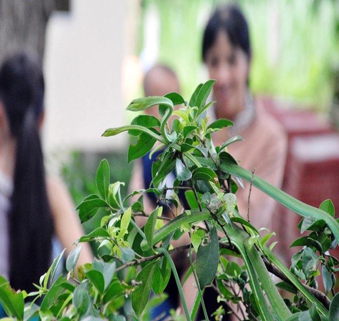 Rùng mình hàng trăm con rắn lúc nhúc trên cây ở trại mãng xà lớn nhất VN - 12