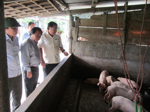 Xót xa: Giá lợn giảm mạnh, bệnh lở mồm long móng tăng cao - 1