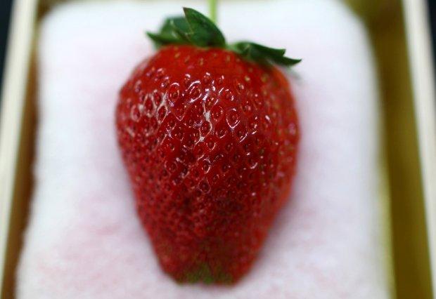 Trái cây độc lạ giá hàng chục nghìn USD hút khách - 6