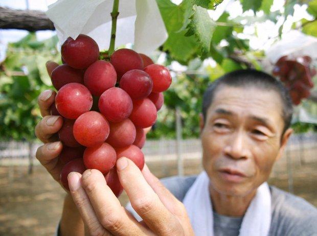 Trái cây độc lạ giá hàng chục nghìn USD hút khách - 8