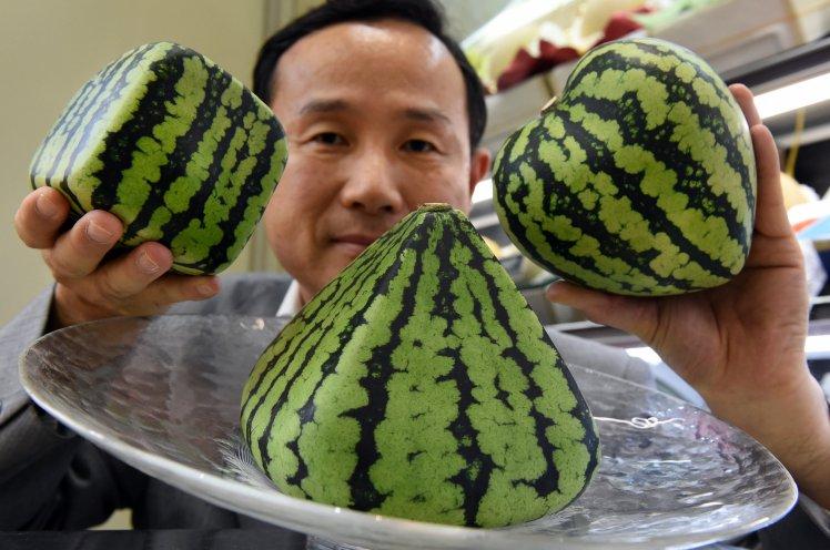 Trái cây độc lạ giá hàng chục nghìn USD hút khách - 4