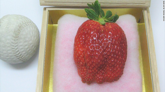 Trái cây độc lạ giá hàng chục nghìn USD hút khách - 7