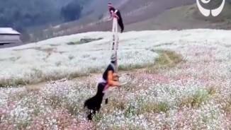 Clip người Mông đu bập bênh giữa đồng hoa gây sốt trên báo nước ngoài