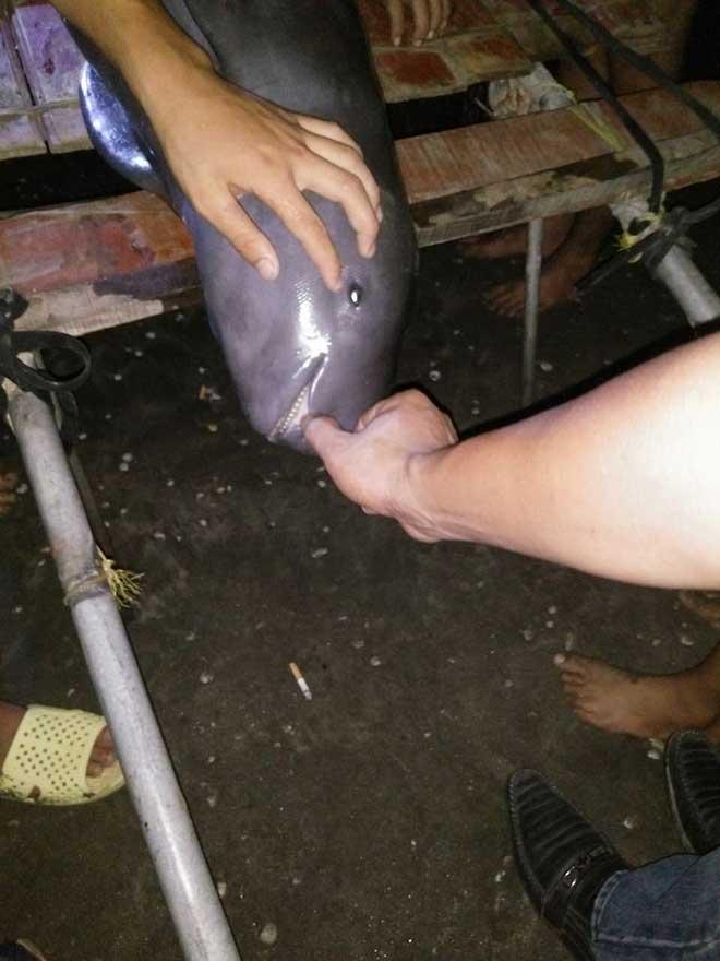 Bắt được cá lạ, dân làng đem cá đi chôn cả đêm - 1