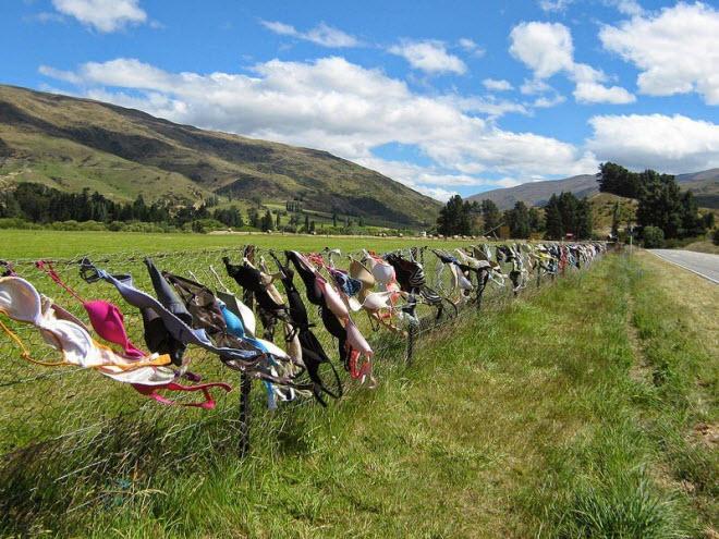 Lạ lùng hàng rào áo ngực hút khách du lịch ở New Zealand - 8
