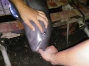 Tin tức trong ngày - Bắt được cá lạ, dân làng đem cá đi chôn cả đêm