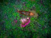 Hồ súng Việt Nam lọt top 12 bức ảnh chụp bằng flycam ấn tượng nhất thế giới