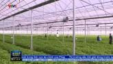 Bắt tín hiệu thị trường - Tiêu chí quan trọng với sản xuất nông nghiệp