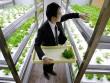 Xôn xao công ty để nhân viên trồng rau nơi công sở