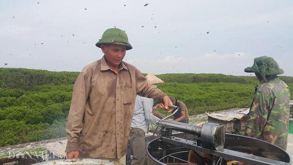 """Rủ nhau đi kiếm """"mật của biển"""", nông dân thu trăm triệu/vụ - 9"""