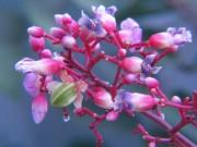 Bài thuốc quý từ hoa vườn nhà