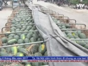 Lập công ty  ma  nhập khẩu nông sản trốn thuế GTGT