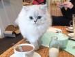 """Ghé thăm thành phố nơi những chú mèo đáng yêu """"thống trị"""""""