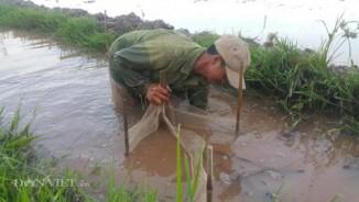 """Đi bắt """"con trơn"""", nông dân Cố đô bỏ túi cả triệu đồng mỗi ngày"""