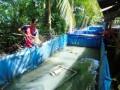 Cất bằng đại học vô tủ, kỹ sư trẻ lăn lộn với nghề nuôi lươn