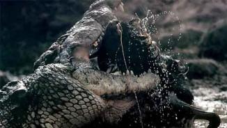 """Sự tàn bạo của """"quái vật"""" khổng lồ vua đầm lầy Amazon"""