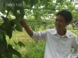 """Làm nhà lưới """"nhốt"""" rau sạch, nhà nông có thu nhập cả chục triệu/tháng"""