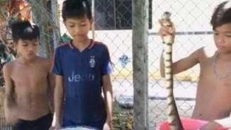 3 bé trai Thái Lan làm thịt rắn ăn trưa gây sốt