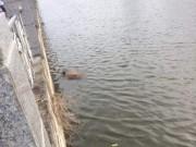 Tin tức trong ngày - Đi đám cưới 2 ngày không về, tìm thấy thi thể nổi trên sông
