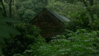 """Giáp mặt với gia đình """"người rừng"""" trong khu vườn kì bí"""
