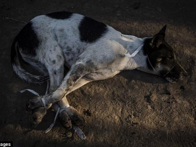 Rợn người cảnh chặt đầu trong lò mổ chó ở Indonesia - 5