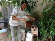 """Thị trường - Tiêu dùng - Mới, lạ: Thong thả nuôi ong ven biển, mật đắt hàng, """"bỏ ống"""" 200 triệu/năm"""