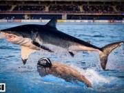 """Thể thao - Phelps đua cá mập là trò hề, xem """"Ma tốc độ"""" mới hấp dẫn"""