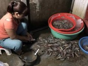 Thị trường - Tiêu dùng - Hà Nội: Bắt quả tang bơm tạp chất vào tôm tại chợ đầu mối