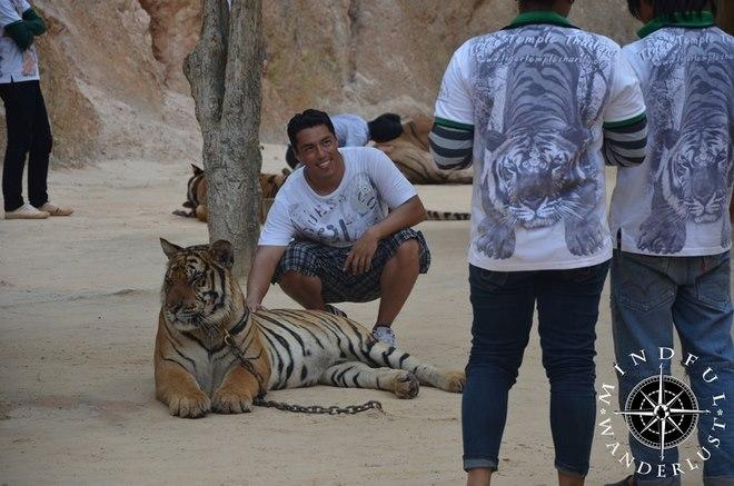 """Sốc với lí do hổ dữ """"hiền như cún"""" ở chùa Thái Lan - 3"""