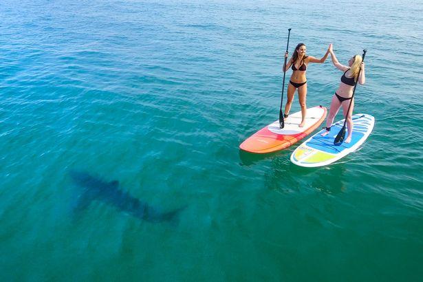 Hai cô gái mặc bikini bị 5 cá mập bao vây ở Mỹ - 1