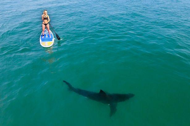 Hai cô gái mặc bikini bị 5 cá mập bao vây ở Mỹ - 2