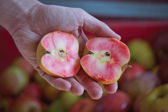 """Mê mẩn loại táo Mỹ lạ """"xanh vỏ - hồng lòng"""" siêu dễ thương - 1"""