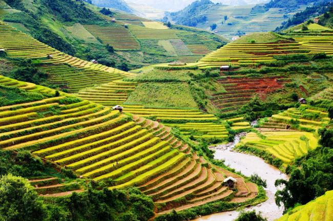 Ruộng bậc thang Mù Cang Chải, Việt Nam: Những cánh đồng lúa bậc thang ở miền bắc Việt Nam tạo nên phong cảnh đẹp như tranh vẽ.
