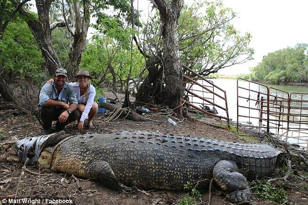 Úc: Bắt cá sấu khổng lồ 8 tạ, dùng băng dính dán kín mồm - 3