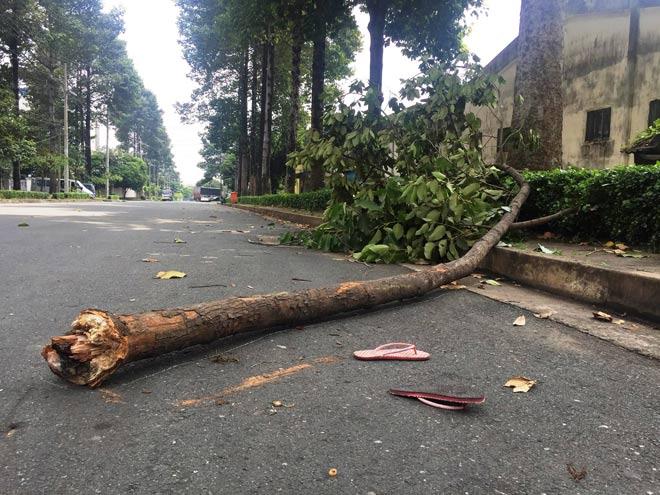 Vụ nhánh cây rơi trúng nữ công nhân: Người mẹ trẻ mãi mãi bỏ lại 2 con thơ - 1