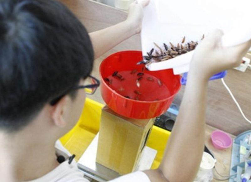 Sinh viên Đài Loan nuôi gián kiếm gần 7000 đô mỗi tháng - 2