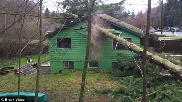 """Chặt cây, bị cây """"đập"""" cho hỏng nhà - 1"""