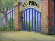 Phim Tom và Jerry: Đột nhập lãnh địa của... chó