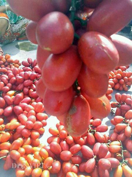 Cây dại ra quả đỏ đẹp mê hồn, trẻ ăn vui vẻ, phụ nữ da hồng hào - 4