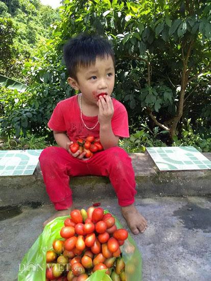 Cây dại ra quả đỏ đẹp mê hồn, trẻ ăn vui vẻ, phụ nữ da hồng hào - 5