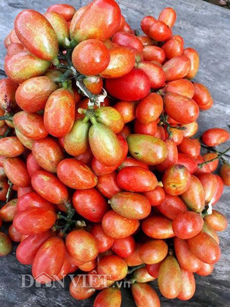Cây dại ra quả đỏ đẹp mê hồn, trẻ ăn vui vẻ, phụ nữ da hồng hào - 7
