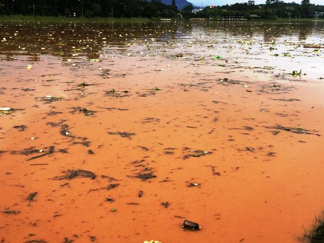 Phát hoảng khi thấy hồ Xuân Hương mộng mơ như bể chứa rác - 5