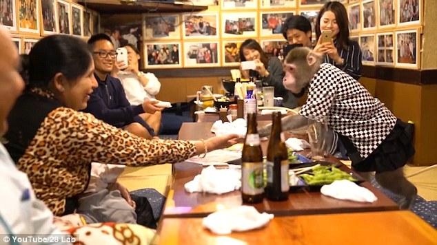 Khỉ làm việc như người ở nhà hàng Nhật Bản - 1