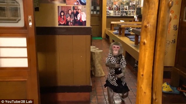 Khỉ làm việc như người ở nhà hàng Nhật Bản - 2