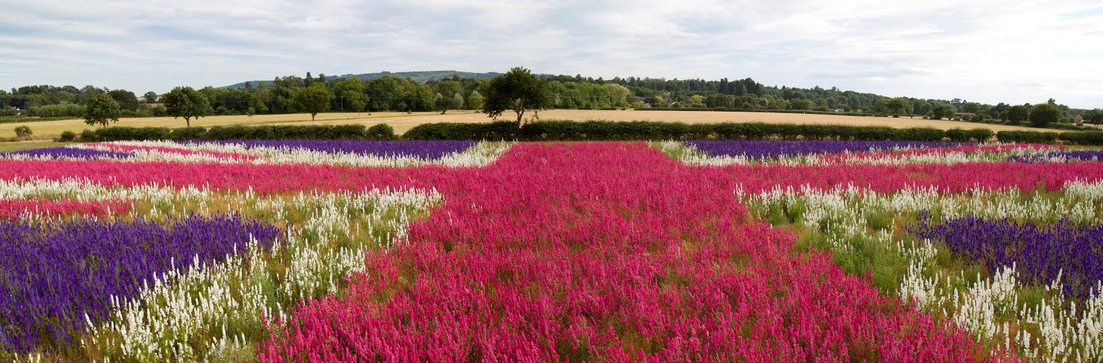 Ngỡ ngàng vẻ đẹp thiên đường hoa mùa hè chỉ mở cửa 7 ngày mỗi năm - 3