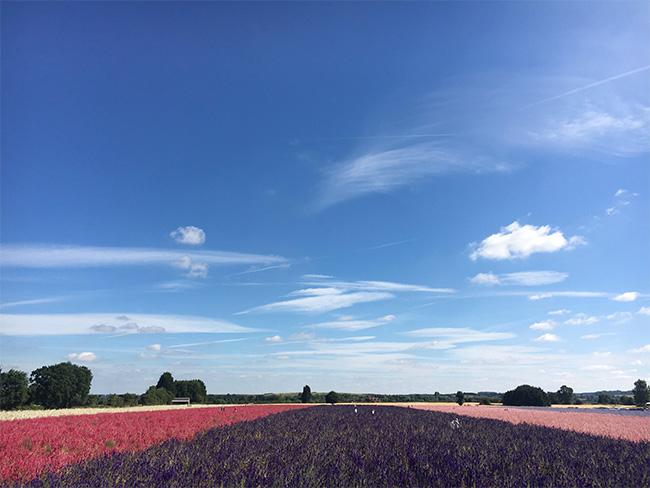Ngỡ ngàng vẻ đẹp thiên đường hoa mùa hè chỉ mở cửa 7 ngày mỗi năm - 1
