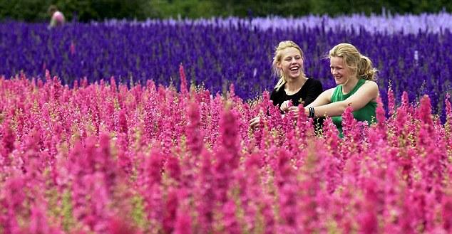 Ngỡ ngàng vẻ đẹp thiên đường hoa mùa hè chỉ mở cửa 7 ngày mỗi năm - 2
